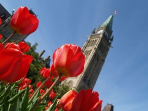 Tulips and Peace tower