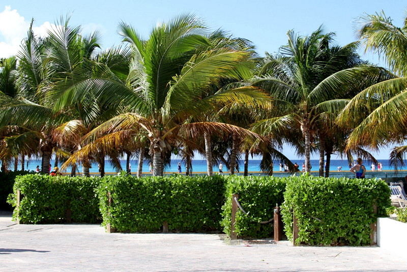 Palm trees in Grand Turk