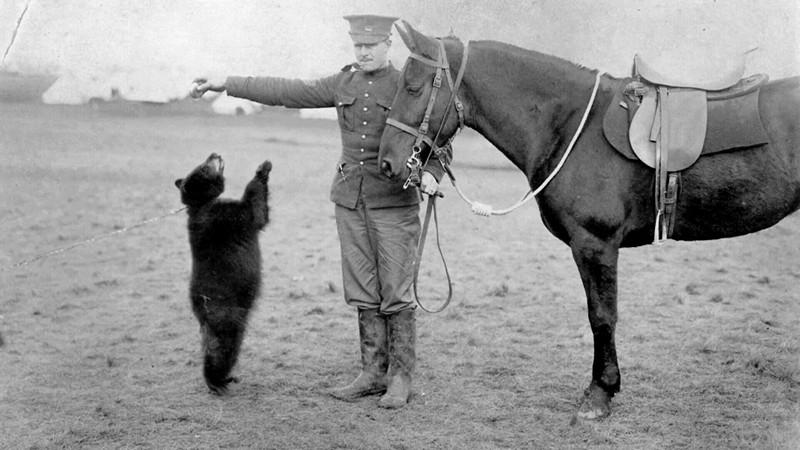 Winnie bear