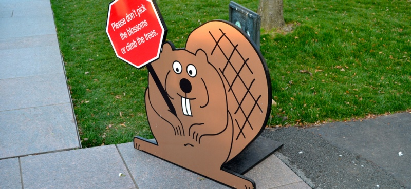 Beaver with sign